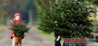 """""""Правильна ялинка"""" – поліцейські дали рекомендації як і де придбати новорічне деревце"""