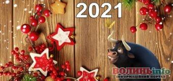 2021 рік Білого металевого Бика: як привернути прихильність тварини
