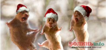 Готуємося до новорічних свят: творимо святкови настрій