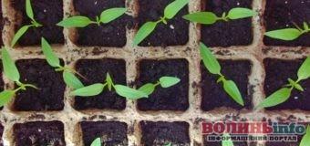 Календар садівника-городника: березень 2021