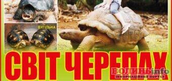 До Луцька з'їхалися черепахи зі всього світу