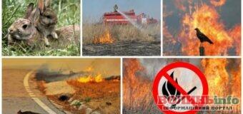 Який штраф доведеться сплатити за спалювання сміття і підпал трави?