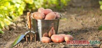 Садимо картоплю: які дні у 2021 році сприятливі за місячним календарем