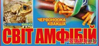 До Луцька привезуть виставку амфібій – будуть від найменшої до велетенської жаби