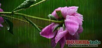 Варто взяти парасольку – у Луцьку і Волині зокрема очікуються дощ, гроза та вітер