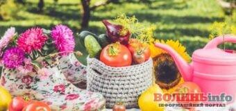 Місячний календар садівника-городника: серпень 2021