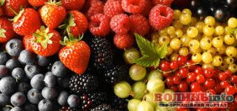 Як правильно їсти літні ягоди?