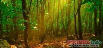 66 мільйонів гривень ренти за спецвикористання лісових ресурсів на Волині сплачено