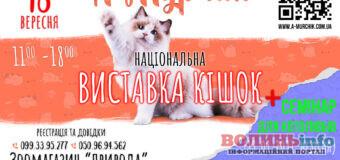 Клуб любителів кішок «А-Мурчик» запрошує на національну Виставку