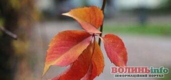 5 жовтня – яке сьогодні свято? Чим особливий день? Кого вітати з Днем ангела?