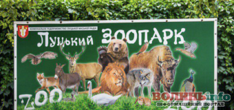 """Луцький зоопарк йде на """"вимушені вихідні"""" – у закладі сталася пожежа, загинули мавпочки"""